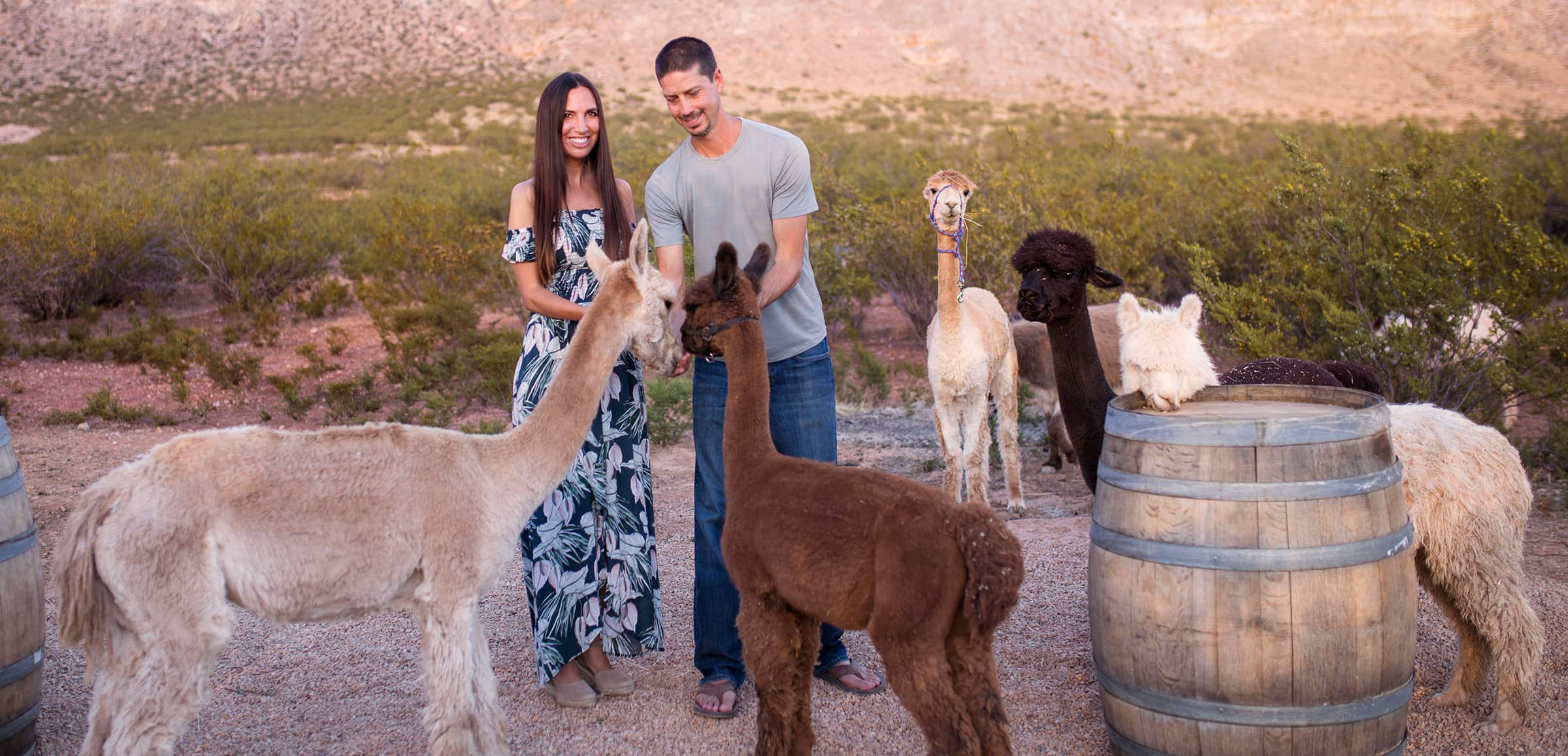 Zion Alpacas Airbnb Experience